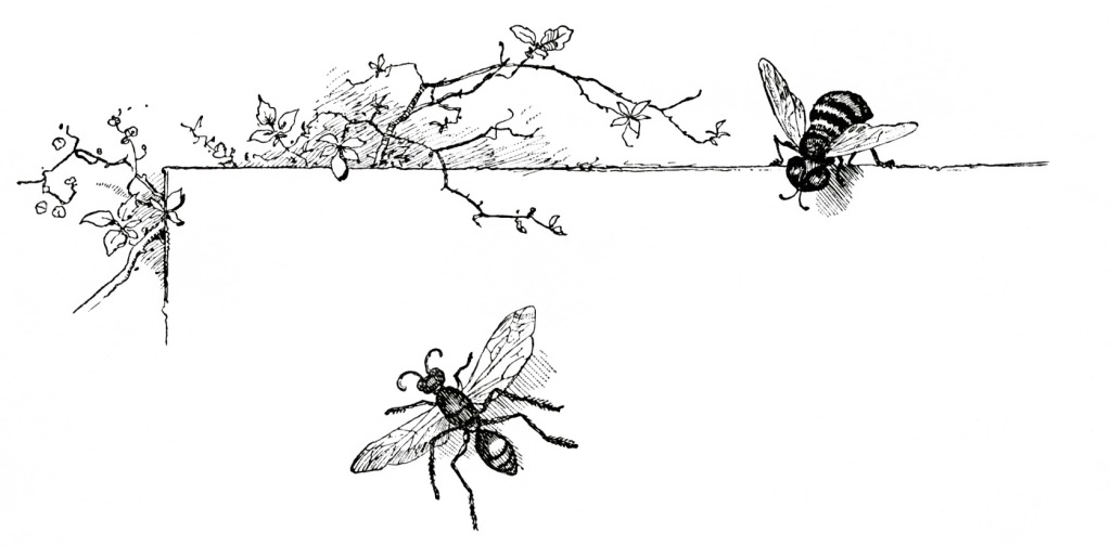 OldDesignShop_WaspAndBee1a-1896