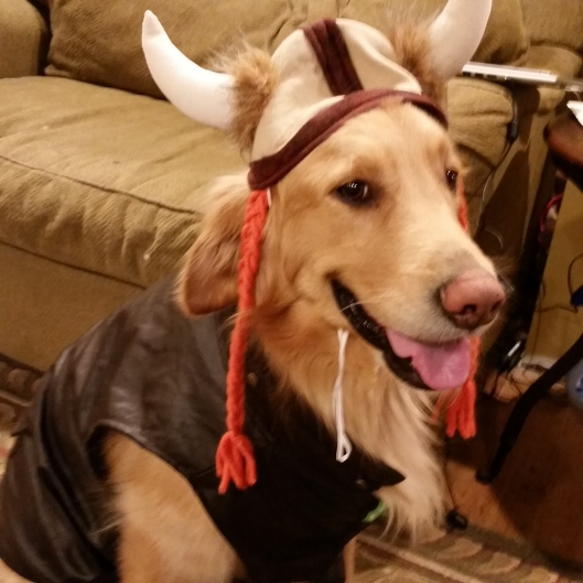 The Mom Pooch in all his  Viking-Dog Glory